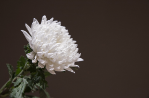 Reno, NV Funeral Home And Cremations